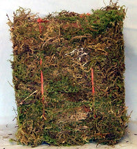 Moss - Green Cage Moss, Mini Bale - bean-farm