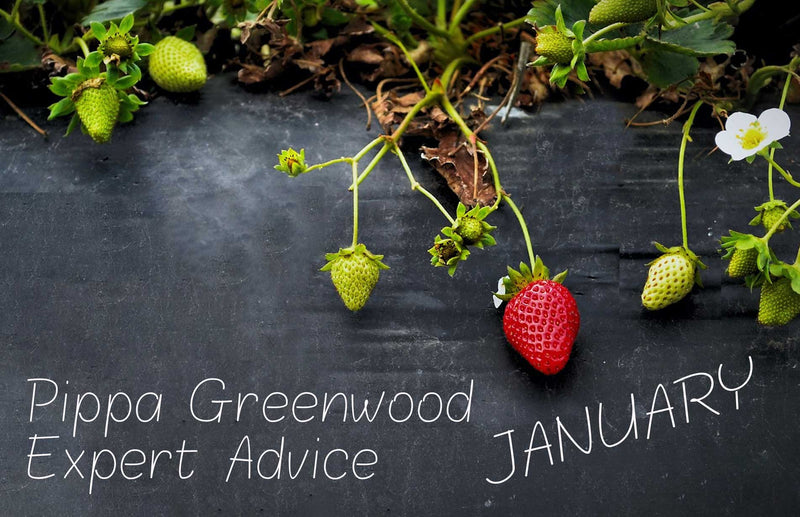 Pippa Greenwood Haxnicks gardening tips for new year January 2021