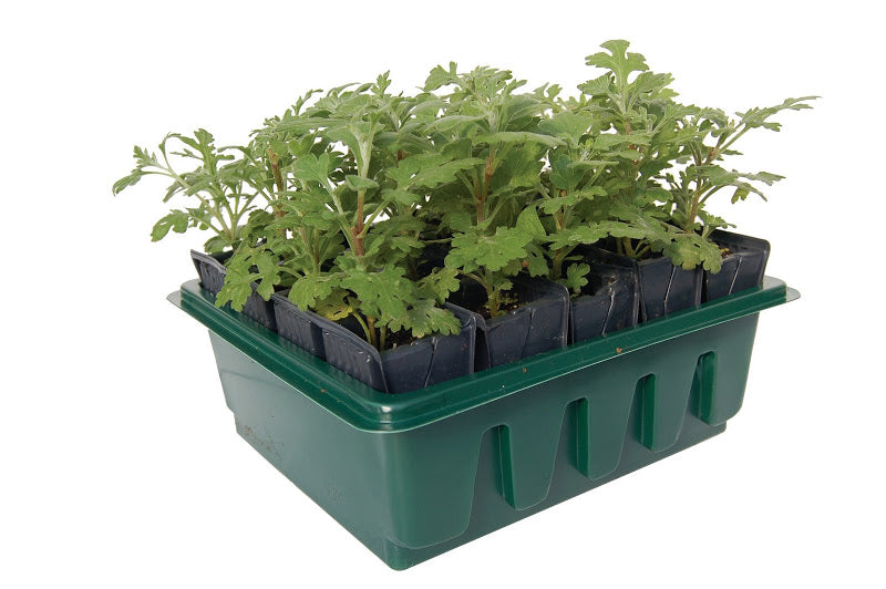 Haxnicks- Compact Rootrainers-container gardening- easy propagation