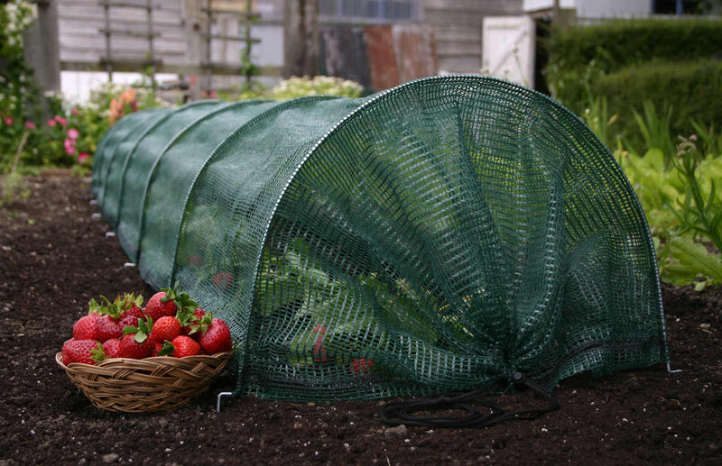Haxnicks Giant Net Easy Tunnel protecting plants from wind and heavy rain