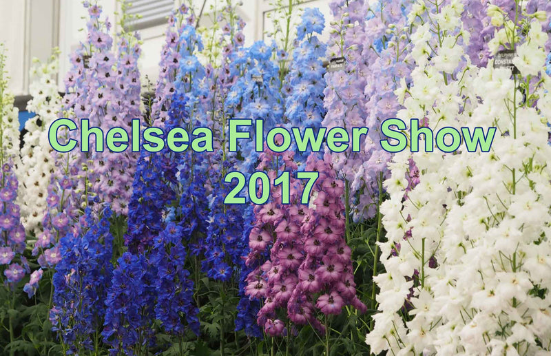 Haxnicks preparations for RHS Chelsea Flower Show 2017