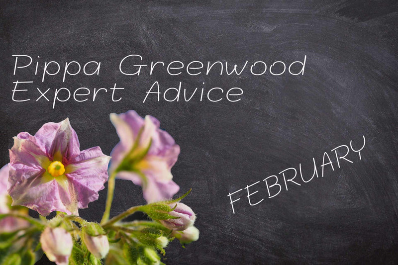 Blackboard with potato flower announcing Pippa Greenwood gardening advice for February