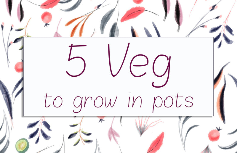 haxnicks- grow at home-growing tips- 5 veg you can easily grow in a pot or planter- urban vegetable growing
