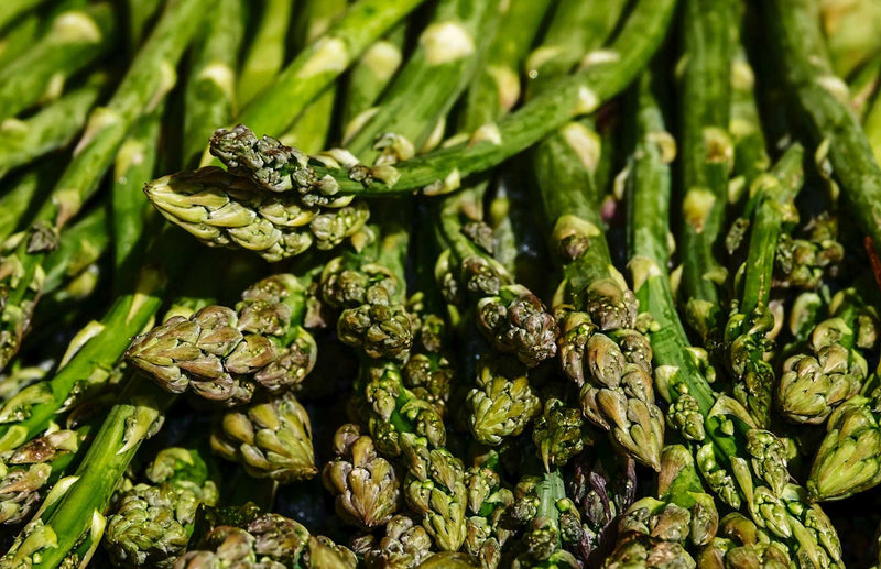 Haxnicks Gardening tips how to grow asparagus the best way