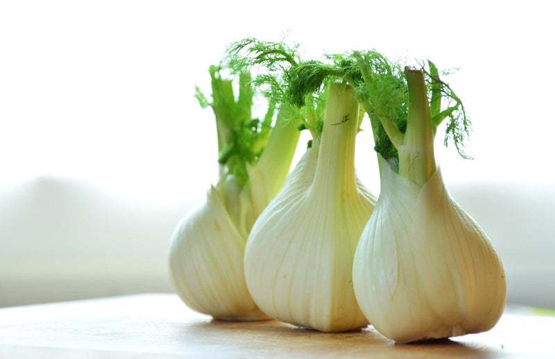 haxnicks- how to grow Florence or sweet fennel- easy growing guide