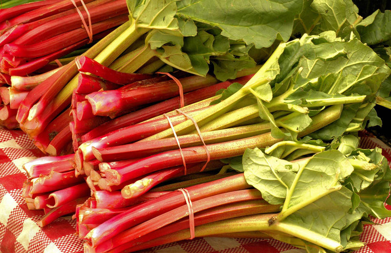 Haxnicks gardening advice how to grow rhubarb the best way