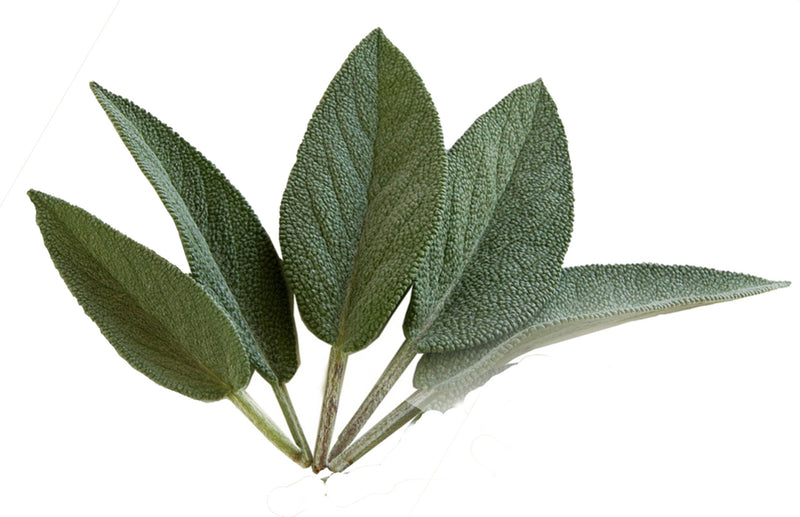How to grow sage herbs in a container