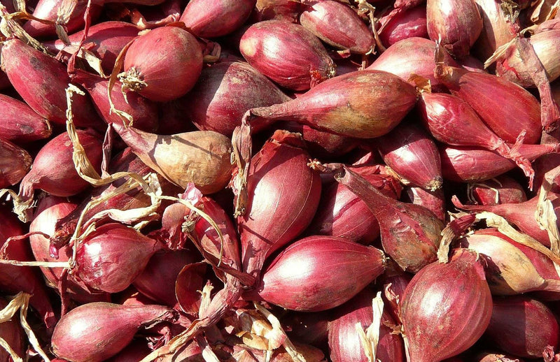 How to grow shallots - whats the best way to grow banana shallots
