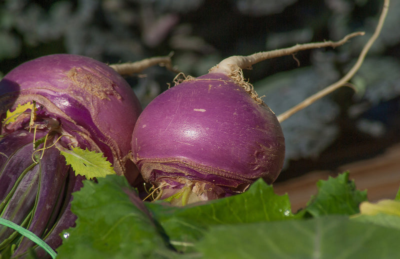 haxnicks- grow at home- how to grow turnips- turnip growing tips