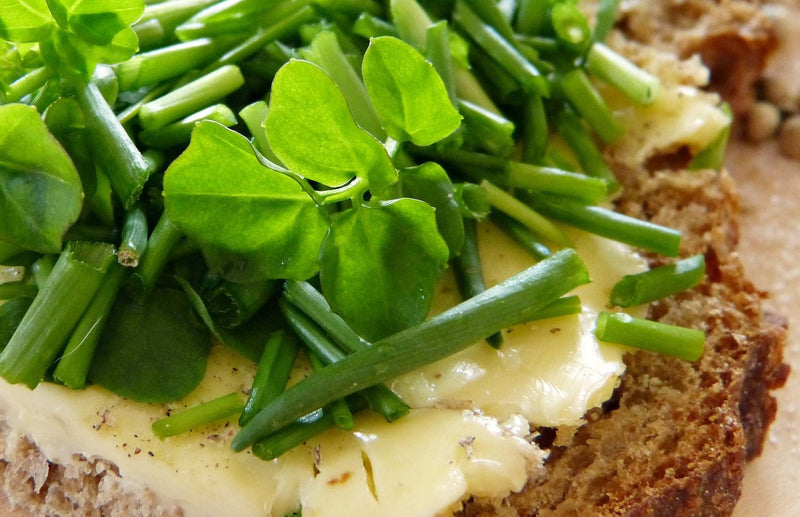 How to grow Watercress - tips and tricks to grow watercress