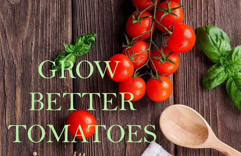 haxnicks- pot size for growing tomatoes- grow better tomatoes- tomato growing guide/tips