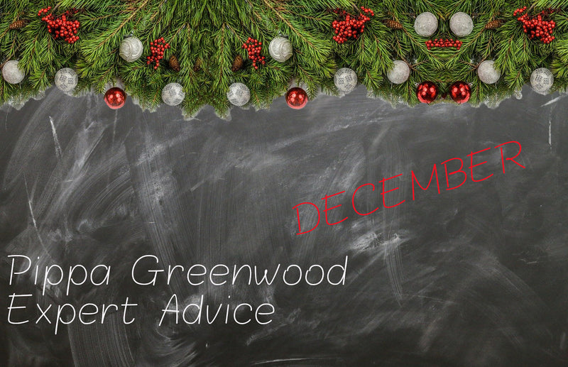 Haxnicks- Pippa Greenwood gardening tips for December- expert advice- gardening in December