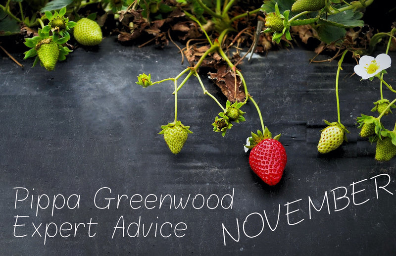 haxnicks- Pippa Greenwood gardening tips for November- what to plant in November