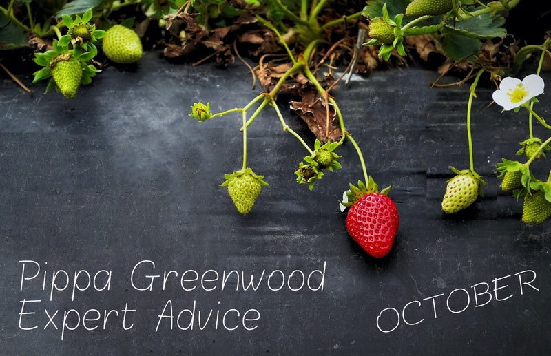 haxnicks gardening tips for October- Pippa Greenwood expert advice - what to do in the garden in October