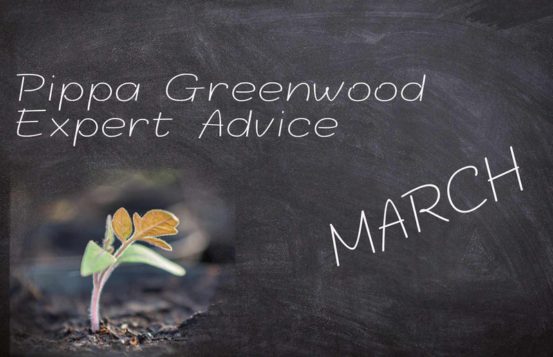 Pippa Greenwood: Haxnicks gardening advice for March