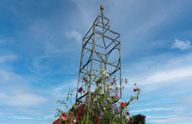 Haxnicks Big Ben plant frame plant support for beans, peas, sweet peas and climbing plants