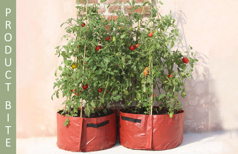 Haxnicks Tomato patio Planters against a wall