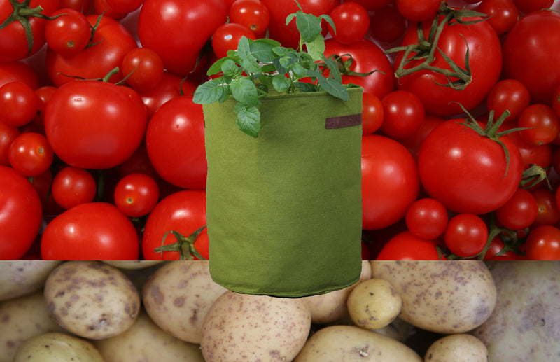 Haxnicks-vigoroot-potato-planter-tomato-planter-urban-gardening-patio-planter