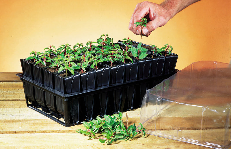 Haxnicks-deep-root-trainer-how-to-grow-straight-roots-seedling-planter-propogation