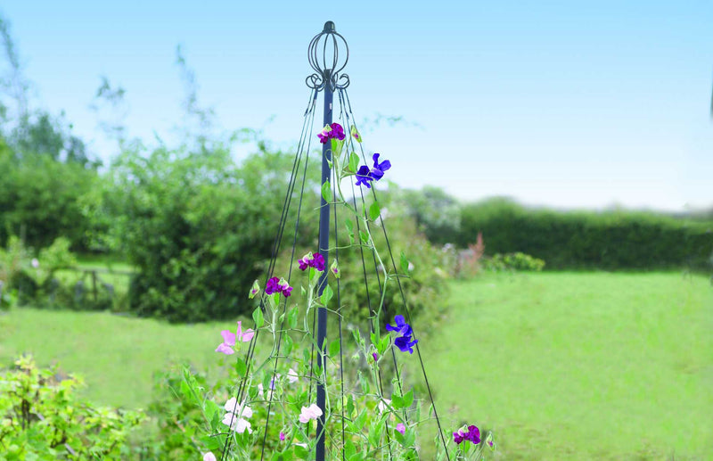 decorative maypole support for climbing plants like sweetpeas and runner beans