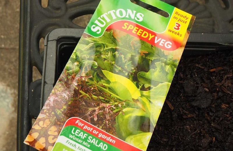 Haxnicks gardening tips and tricks seeds to plant in Spring