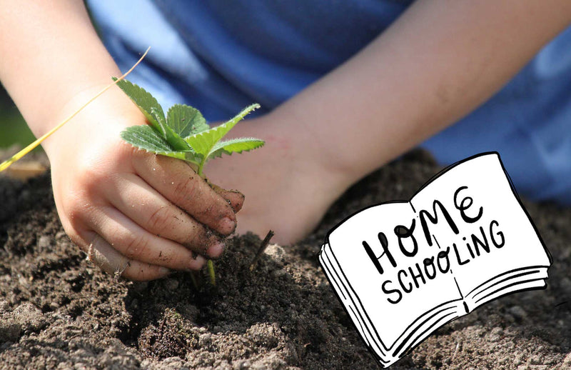 Child planting in the garden homeschooling ideas for Lockdown 3