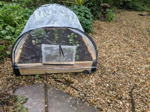 Haxnicks Raised Bed with polythene cover on and plants inside