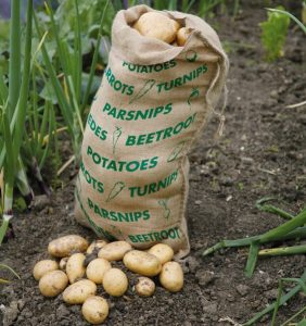 storing_vegetables_potatoes_in_jute_sack