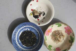 flower-seed-in-bowls