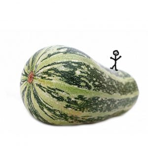 compost_giant_marrow_with_stickman