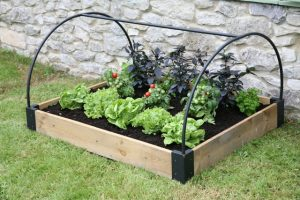 Raised_Bed_and_frame_with salad_Haxnicks