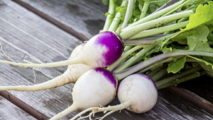 bunch_of_harvested_turnips_on_bench