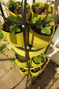 Haxnicks Self Watering Tower Garden with strawberries, herbs and tomatoes