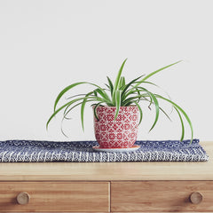 Spider plant house plant on table