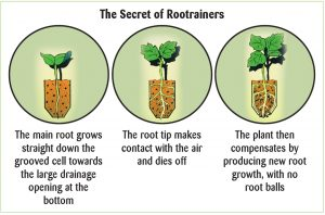 Rootrainers_diagram_showing_root_formation