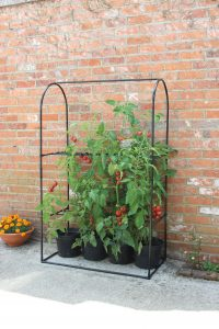 Haxnicks_Tomato_crop_booster_frame_with_cover_on_patio