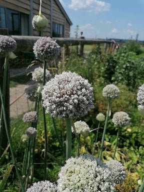 Bolted Leeks