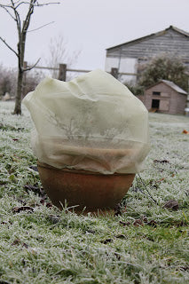 Protecting_plants_with_Haxnicks_Fleece_Jackets_over_pot_in_frosty_garden