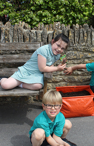 Haxnicks Carrot Patio Planters for Schools