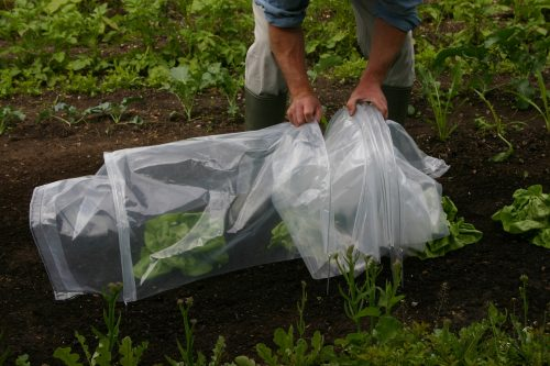 Haxnicks Micromesh Easy Tunnels offer great protection for garden plants