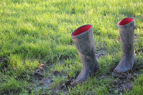 Haxnicks' Potty Gardener's Wellington Boots stuck in the Mud
