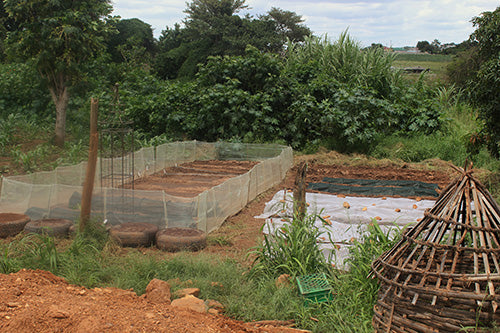 Haxnicks Garden at the Heal Project in Zambia