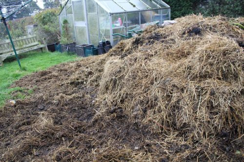 Horse Manure and its nourishing factors