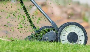 lawn-mower-cutting-leaves-for-leafmould