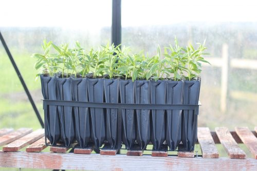 New Garden products Maxi Rootrainers from Haxnicks with tree saplings growing.