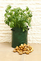 Home Grown Potatoes for Everyone from Haxnicks