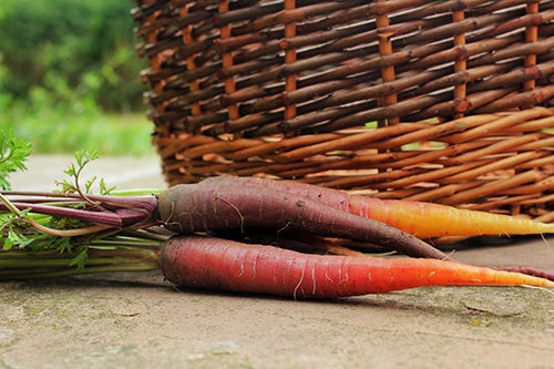 Purple Carrots grown with Haxnicks Products