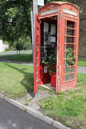 Growing Tomatoes in a Telephone Box