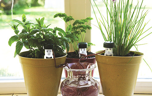 New_Product_Water_Waiters_in_three_Bamboo_plant_pots