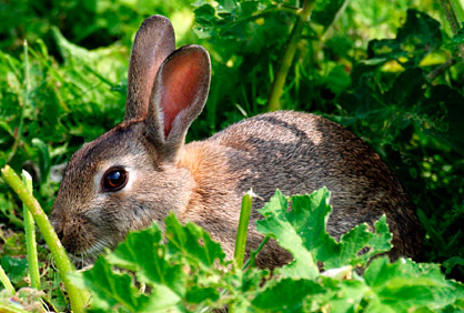 Keeping Rabbits away from Garden Plants